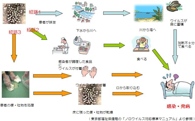 経路 感染 ノロ ウィルス